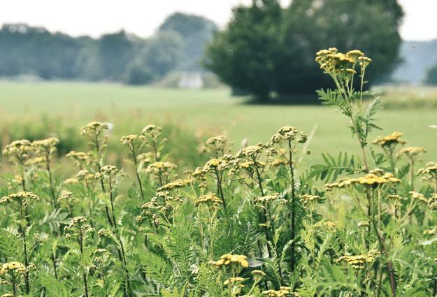 Blumen im Naturschutzgebiet
